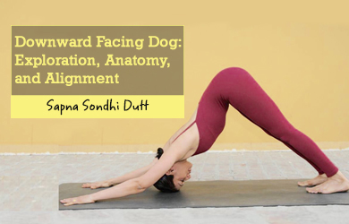 Downward facing dog anatomy and alignment