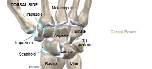Wrist_bones